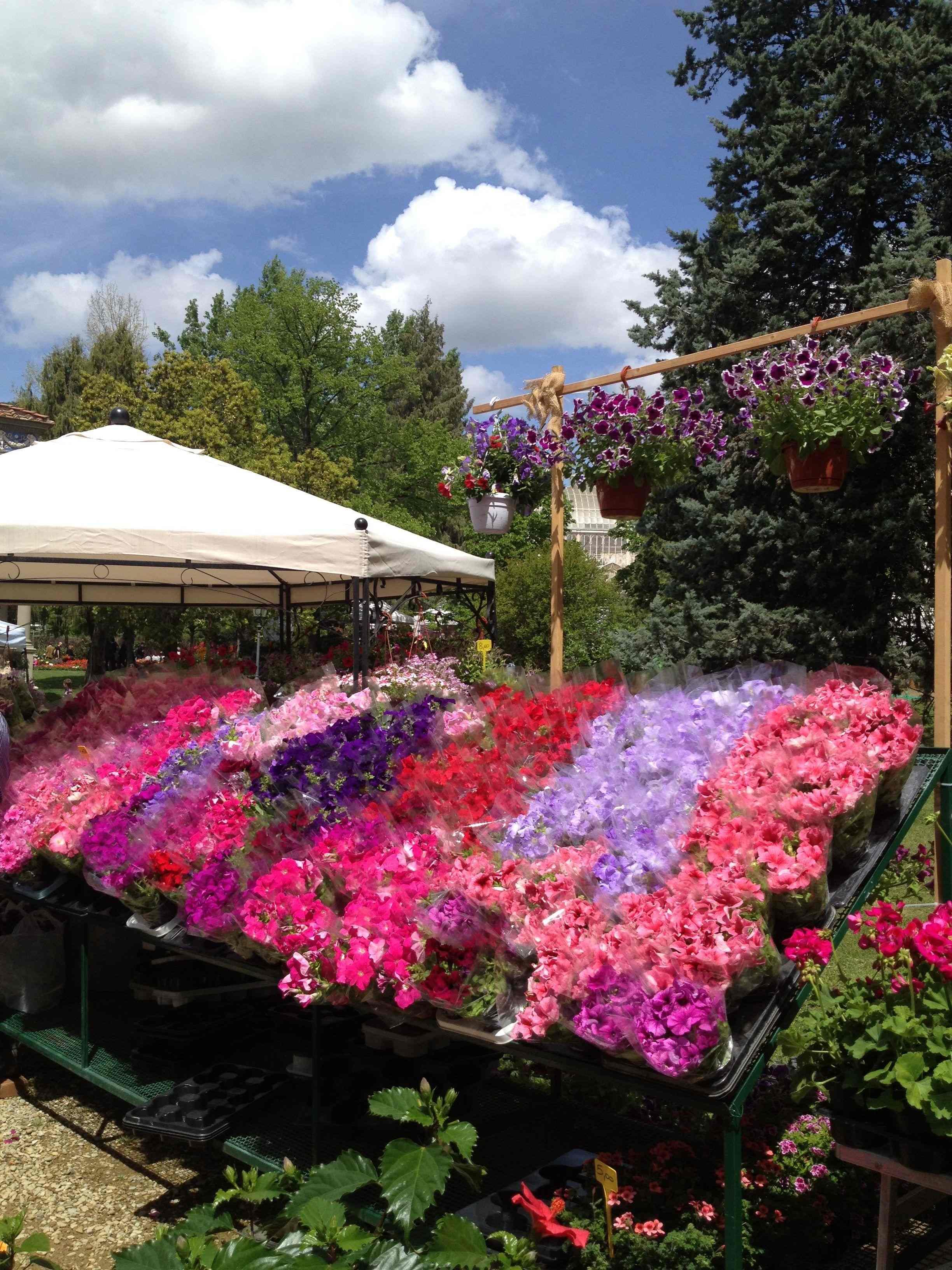 Mostra dei fiori al giardino dell 39 orticoltura 25 aprile - Giardino dell orticoltura firenze ...