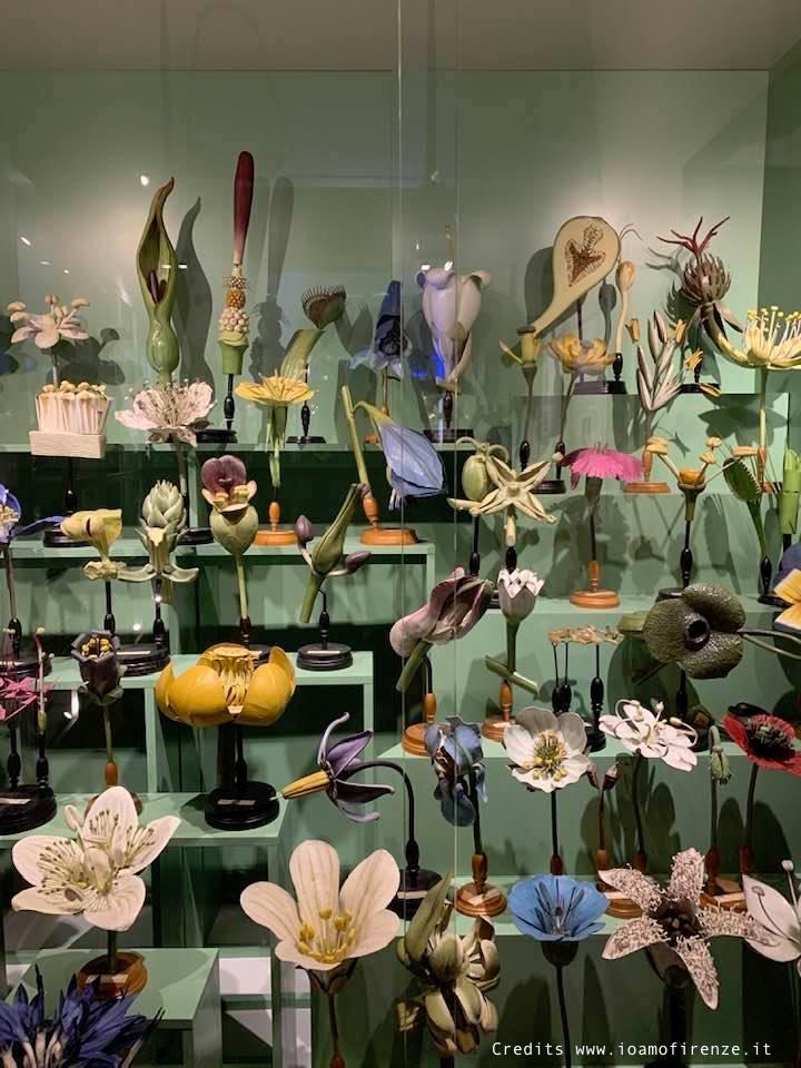 modellini piante e fiori